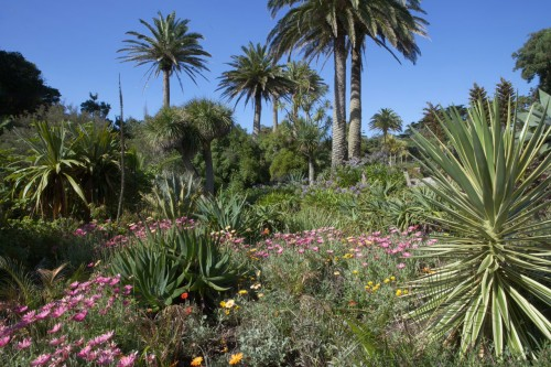 Tresco Abbey Garden: Get the look in 3 pots - G24G