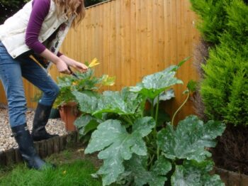 Gardening In May