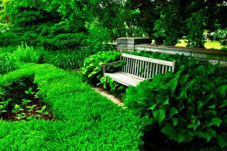 Lanscaped Garden
