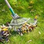 cleaning green lawn from leaf litter