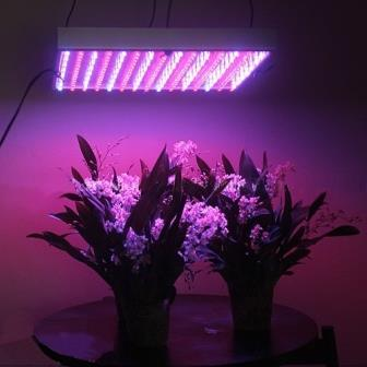 led-grow-lights