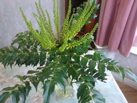 mahonia-japonica-in-vase
