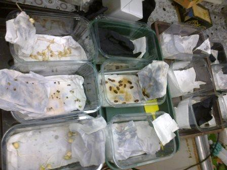 seed-germination-test