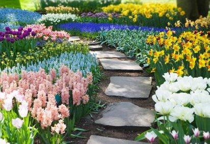 colour block planting