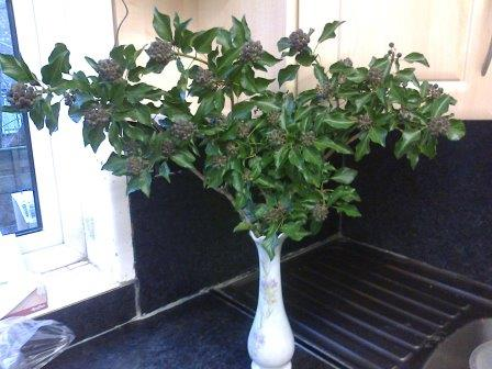 Ivy flowers in vase