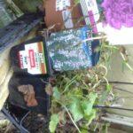cheap perennials