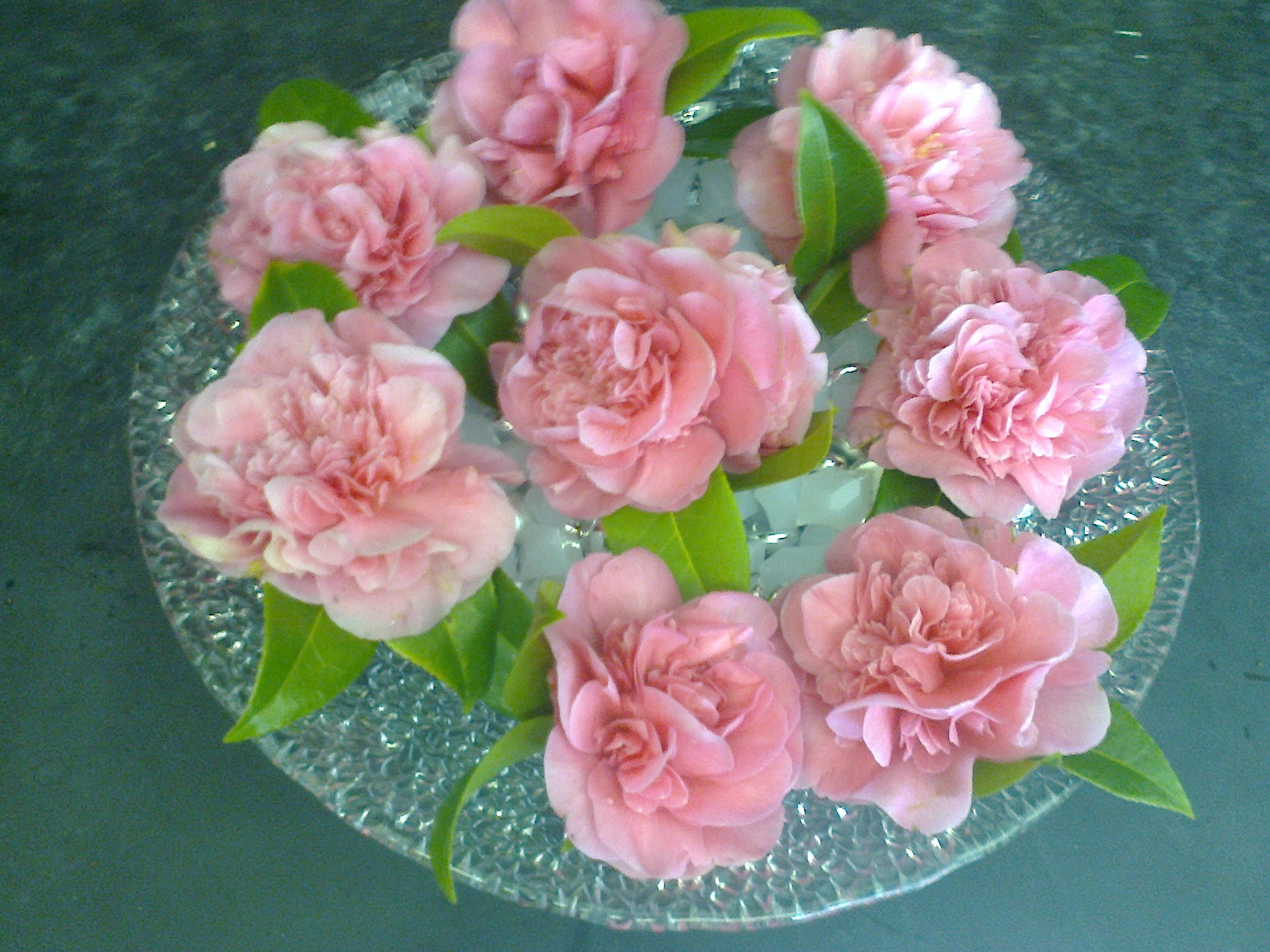 pink camelia blooms arranged in aqueous gel