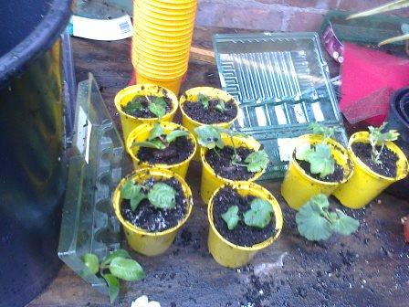 potting on...