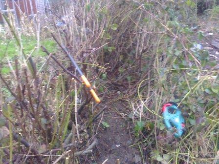 pruning overgrown hedge