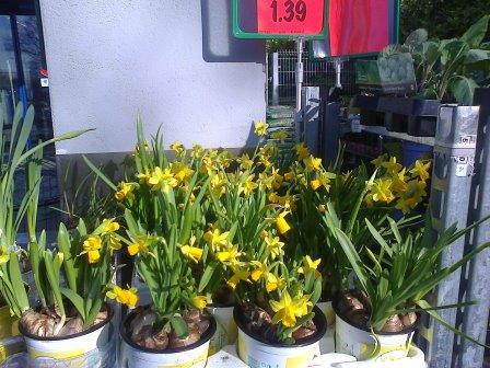 tete a tete daffodils for sale