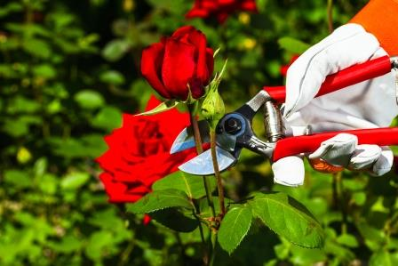 Buy Secateurs at Argos.co.uk - Your Online Shop for Home ...