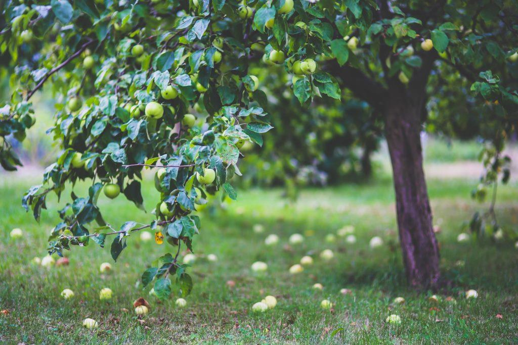 https://www.pexels.com/photo/apple-tree-6035/