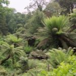 the-lost-gardens-of-heligan